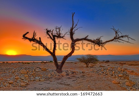 Sunrise in the Jude Desert, a dry tree in the foreground  - stock photo