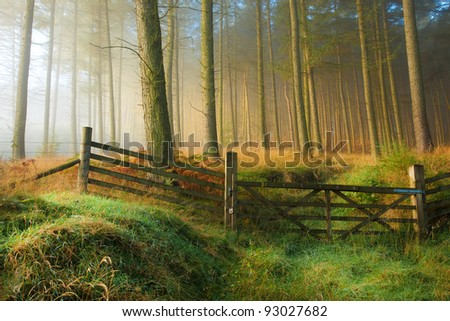 Sunrise in the woods on a Misty Morning - stock photo