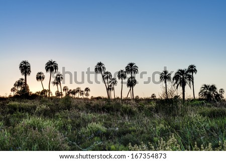 Sunrise on El Palmar National Park (Parque Nacional El Palmar), one of Argentina's national parks, located on the center-west of the province of Entre Rios, between the cities of Colon and Concordia. - stock photo