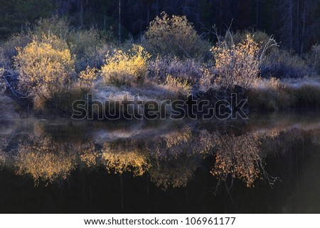 sunrise on golden willows in autumn with a reflection in the river/ Golden Willows - stock photo