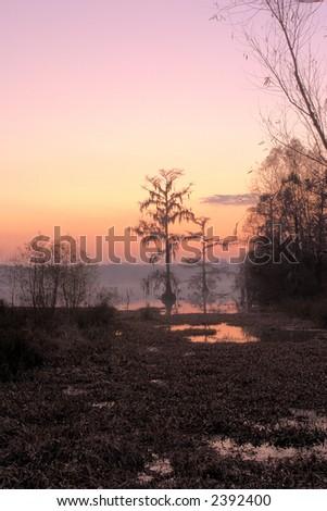 Sunrise on Lake Martin, Breaux Bridge, Louisiana. - stock photo