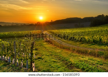 sunrise over a vineyard in the south west of France, Bergerac. - stock photo