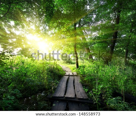Sunrise over a wooden bridge in the forest - stock photo