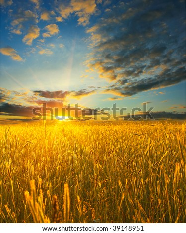 Sunrise over field with wheat - stock photo