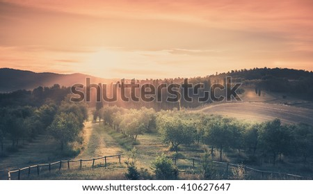 Sunrise over olive field in Tuscany, Italy - stock photo