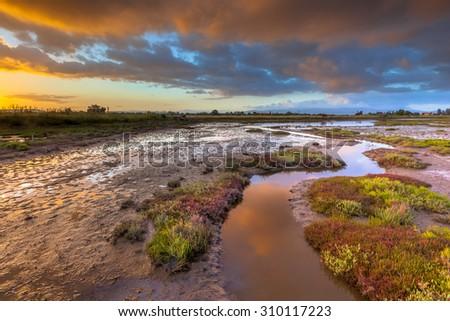 Sunrise over the salt tolerant marsh vegetation on an estuary near Skala Kallonis on Lesbos island, Greece - stock photo