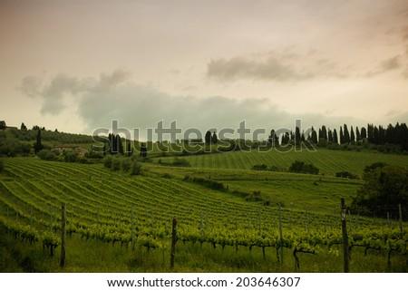 Sunrise over vineyards, Tuscany, Italy - stock photo