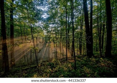 Sunrise Shining on the Appalachian Trail in Spring Appalachian Trail, Appalachian Mountains, North Carolina  - stock photo