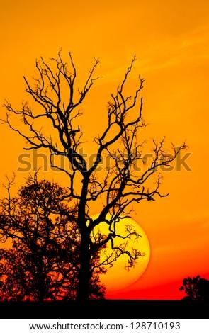 Sunrise silhouette - stock photo