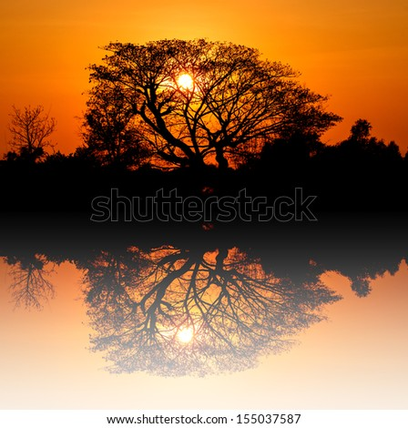 Sunrise silhouette behind the trees at Thailand - stock photo