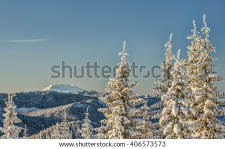 Sunrise Strikes Snow Covered Alpine Trees with Mount St. Helens in the Distance - stock photo