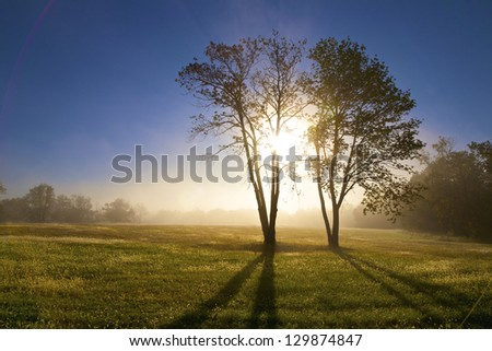 Sunrise through tree with foggy field with dew on the grass. - stock photo