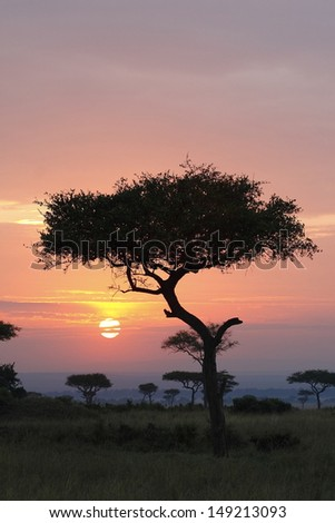 Sunrise with acacia trees - stock photo