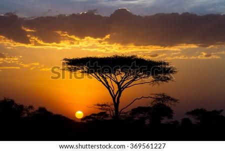 Sunset and Acacia tree in the Serengeti, Tanzania - stock photo