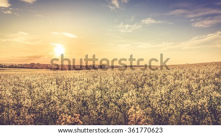 Sunset and idyllic country landscape with field of yellow rapeseed - stock photo
