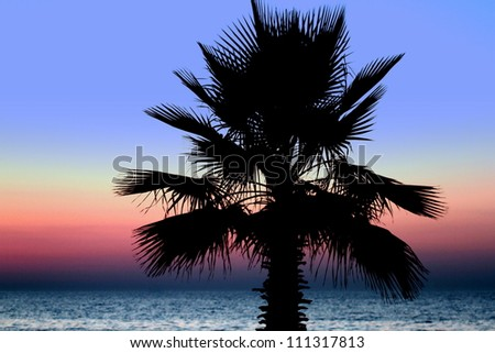 Sunset and palm trees on the beach - stock photo