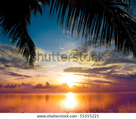 Sunset and Palms - stock photo