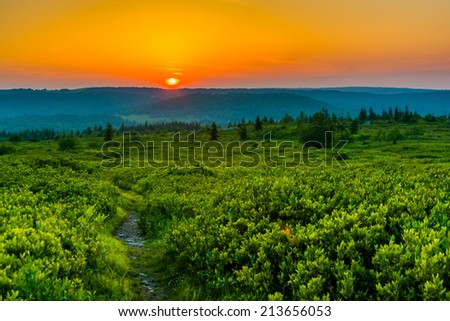 Sunset at Dolly Sods Wilderness, Monongahela National Forest, West Virginia. - stock photo