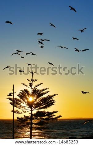 Sunset Birds - stock photo