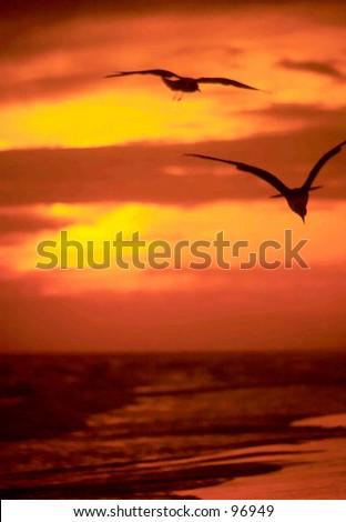 Sunset Flight - stock photo