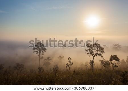 Sunset forest tree landscape, sawanna - stock photo