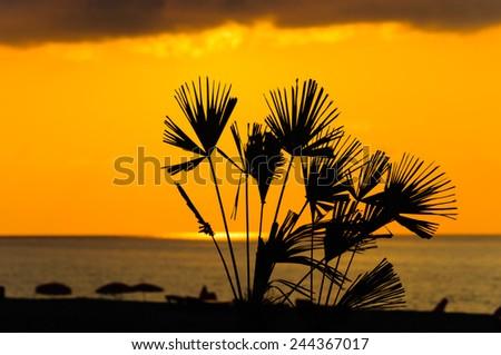 Sunset, golden moments - stock photo