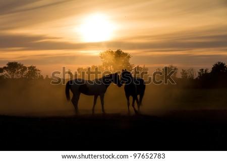 Sunset horses - stock photo