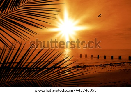 sunset image of seascape and seabird in florida - stock photo