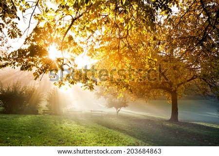 Sunset in autumn park. Autumn landscape. - stock photo