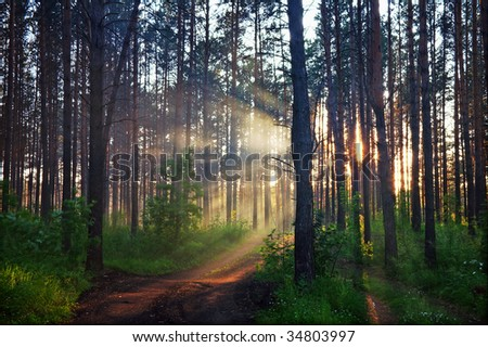 sunset in blurred mystery forest - stock photo