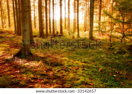 Sunset in forest in autumn - stock photo