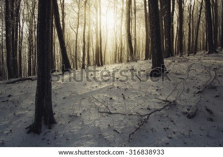 sunset in forest in winter - stock photo