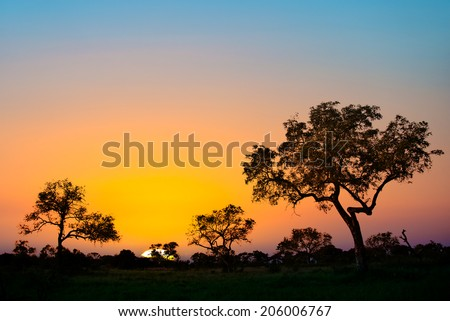 Sunset in Kruger park, South Africa - stock photo