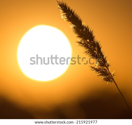 sunset in nature - stock photo