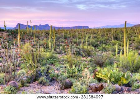 Sunset in Saguaro National Park near Tucson, Arizona. - stock photo