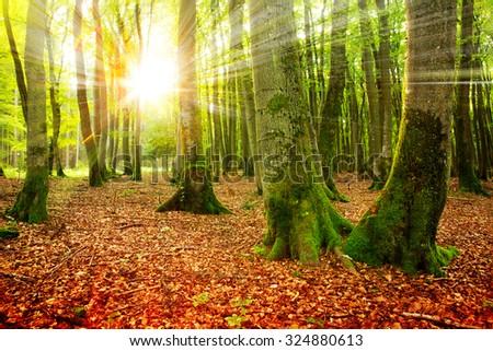 Sunset in the autumn forest. Autumn landscape . - stock photo