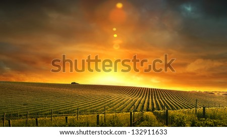 Sunset in the Barossa Valley - stock photo