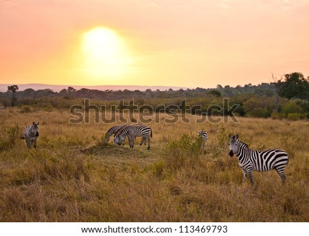 Sunset in the Clouds with Zebras, Kenya - stock photo
