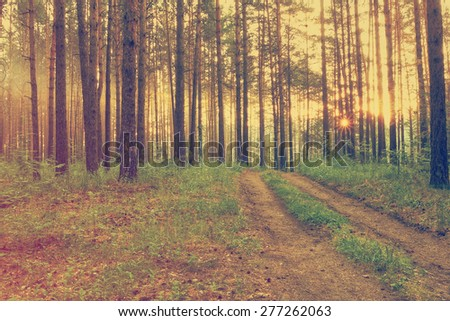 sunset in the dark forest after rain, retro film filtered, instagram style  - stock photo