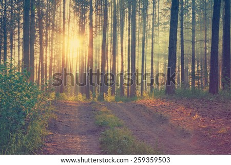 sunset in the forest, retro film filtered, instagram style  - stock photo
