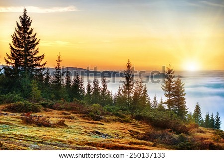 Sunset in the mountains in front of beautiful nature with forest and ocean of clouds - stock photo