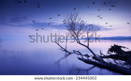 Sunset lake with birds. This photo make in Hungary. Sunset whit Balaton  - stock photo