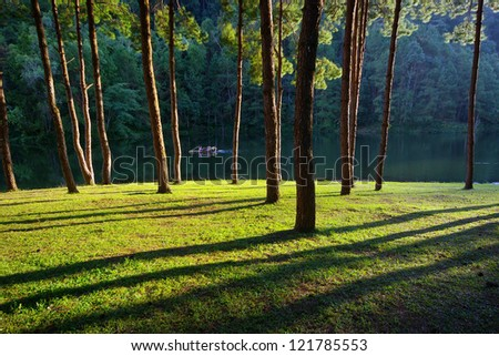 Sunset light at Pang-ung in north Thailand, Pine - stock photo