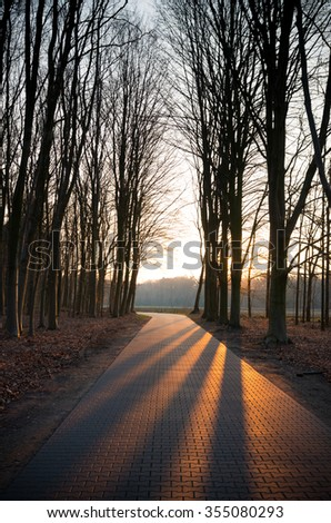 sunset makes larges shadows of trees on a forest road - stock photo