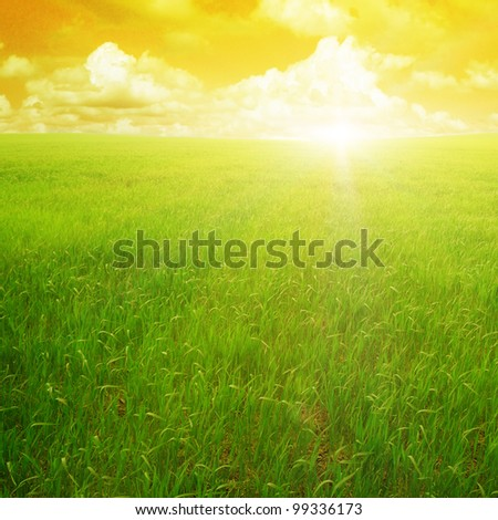 sunset on a spring field - stock photo