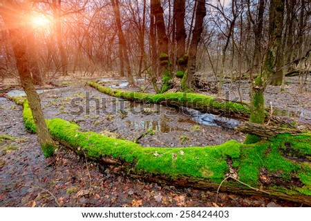 sunset on bog in deep forest - stock photo