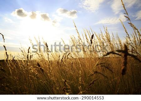 sunset on field at autumn - stock photo