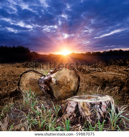 sunset on forest clearing - stock photo