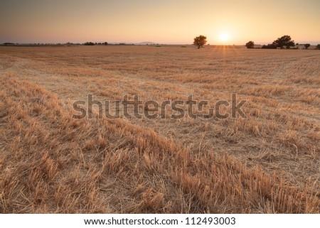 Sunset on Plateau of Valensole, Provence, France - stock photo
