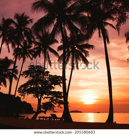 sunset on the tropical beach - stock photo